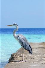 Preview iPhone wallpaper Heron, bird, blue sea