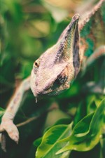Preview iPhone wallpaper Iguana, reptile, lizard, green leaves, hazy