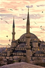 Preview iPhone wallpaper Istanbul, Turkey, mosque, seagull, dusk
