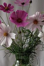 Kosmeya flowers, vase
