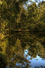 Preview iPhone wallpaper Lake, forest, trees, clear water, nature, reflection