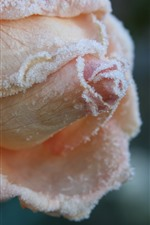 Preview iPhone wallpaper Light pink rose close-up, frost, cold