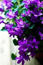 Many little purple flowers, vase, hazy