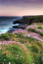 Preview iPhone wallpaper Many pink flowers, sea, grass, nature