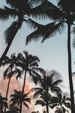 Preview iPhone wallpaper Palm trees, silhouette, clouds, dusk