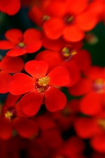 Red little flowers, hazy