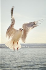 Preview iPhone wallpaper Seagull, flight, wings, sea
