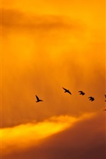Preview iPhone wallpaper Sunset, birds, clouds, sky, orange color