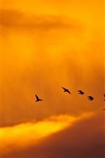 Vorschau des iPhone Hintergrundbilder Sonnenuntergang, Vögel, Wolken, Himmel, orange Farbe