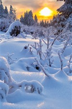 Thick snow, trees, twigs, sunset, winter