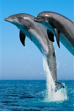Preview iPhone wallpaper Three dolphins jumping, sea, water splash