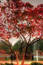 Autumn, park, pond, fountain, tree, red leaves