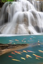 Preview iPhone wallpaper Beautiful waterfalls, many fish
