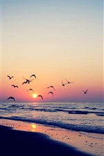 Preview iPhone wallpaper Birds flying in sky, sunset, beach, sea