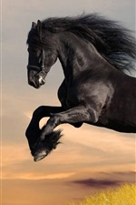 Preview iPhone wallpaper Black horse running, grass