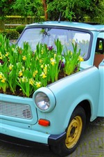 Preview iPhone wallpaper Car, daffodils
