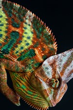Preview iPhone wallpaper Chameleon, colorful, black background