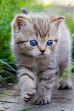 Preview iPhone wallpaper Cute kitten walking, blue eyes, green grass