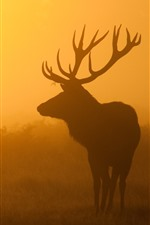 Preview iPhone wallpaper Deer, fog, morning, sunrise