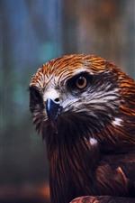Preview iPhone wallpaper Eagle, look, beak, bird close-up