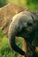 Preview iPhone wallpaper Elephant baby, wildlife