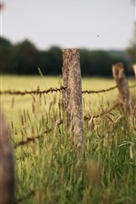 Preview iPhone wallpaper Fence, grass, hazy