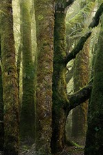 Preview iPhone wallpaper Forest, trees, moss, green, hazy