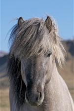 Cavalo cinza, rosto, juba