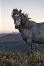 Preview iPhone wallpaper Gray horse, grass, mountains
