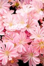 iPhone fondos de pantalla Muchas flores rosadas, pétalos, brillantes