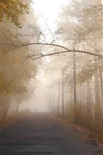 Morning, road, trees, fog, sun rays