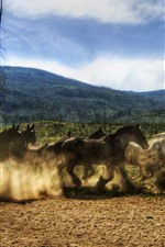 Preview iPhone wallpaper One flock horses, running