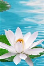 Preview iPhone wallpaper One white water lily flower, pond, water