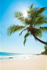 Palm tree, beach, sea, sun rays, tropical, blue sky