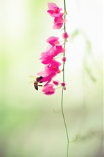 Preview iPhone wallpaper Pink flowers, bee