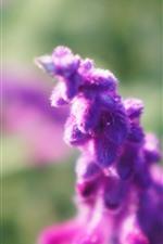Aperçu iPhone fond d'écranGros plan de fleurs roses, brumeux