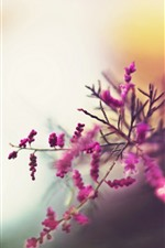Preview iPhone wallpaper Pink little flowers, twigs, hazy