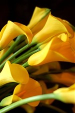 Preview iPhone wallpaper Some yellow calla flowers, bouquet
