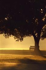 Trees, fog, bench, sunshine, morning, park