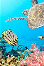 Preview iPhone wallpaper Turtle and fish, sea