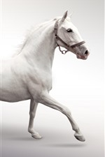 Preview iPhone wallpaper White horse running, white background