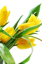 Preview iPhone wallpaper Yellow tulips, water droplets, white background
