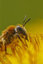 Preview iPhone wallpaper Bee, insect, yellow flower petals