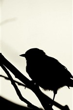 Bird, silhouette, sparrow
