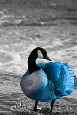 Preview iPhone wallpaper Blue feathers goose, sea
