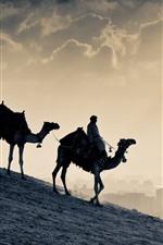 Preview iPhone wallpaper Camels, desert, Egypt
