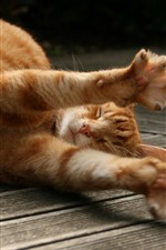 Preview iPhone wallpaper Cute orange cat sleep, paws