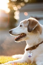 Preview iPhone wallpaper Dog, rest, meadow, sunlight