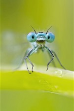 Preview iPhone wallpaper Dragonfly, blue eyes, green leaf, hazy