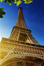 Torre Eiffel, folhas verdes de bordo, raios de sol, França